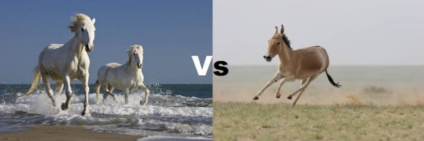 Horse-and-donkey-running